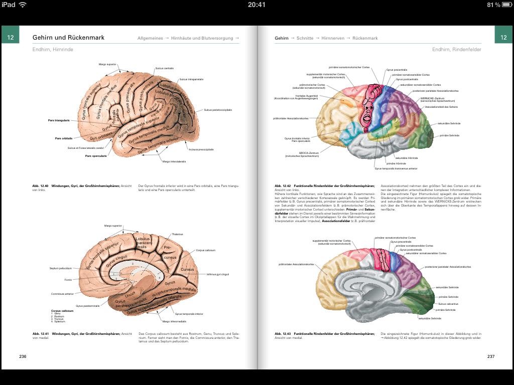 Ausgezeichnet Anatomie Des Gehirns Ppt Zeitgenössisch - Anatomie ...